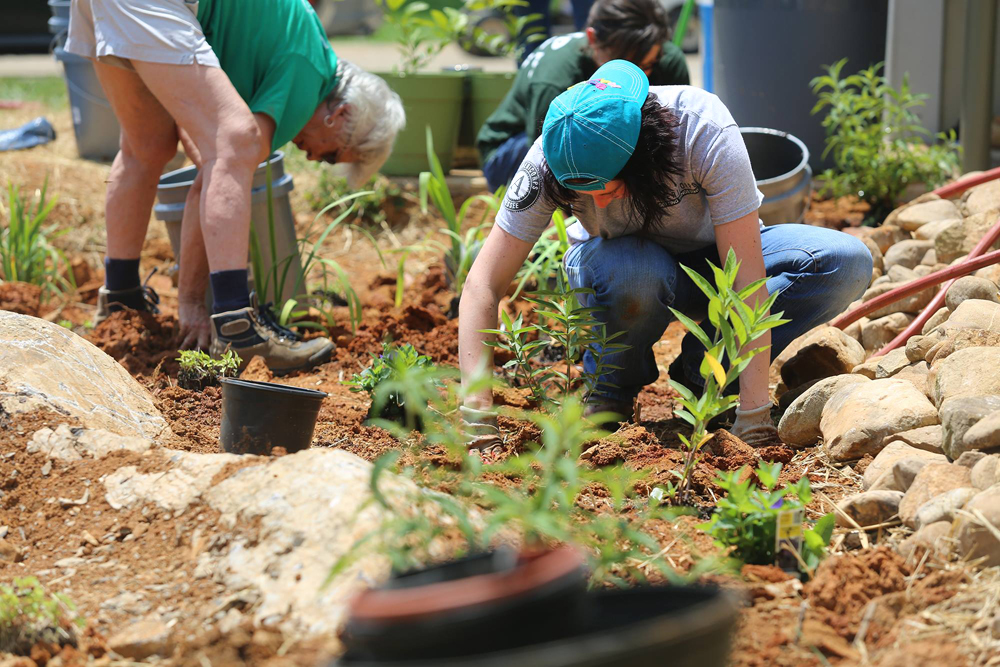 AmeriCorps member, Gwen, planting small shrubs and other plants in a rain garden