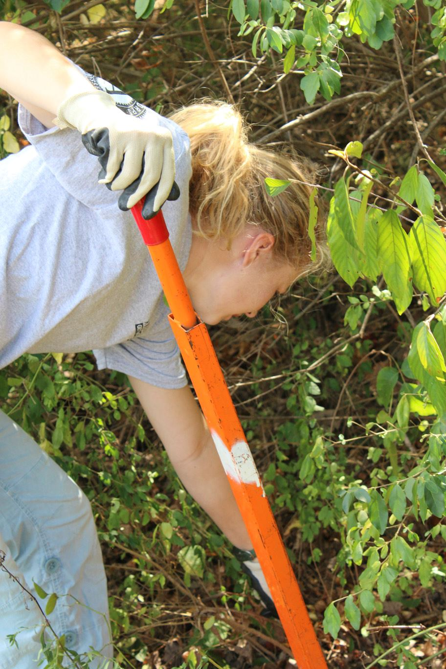 AmeriCorps member removing invasive plant species