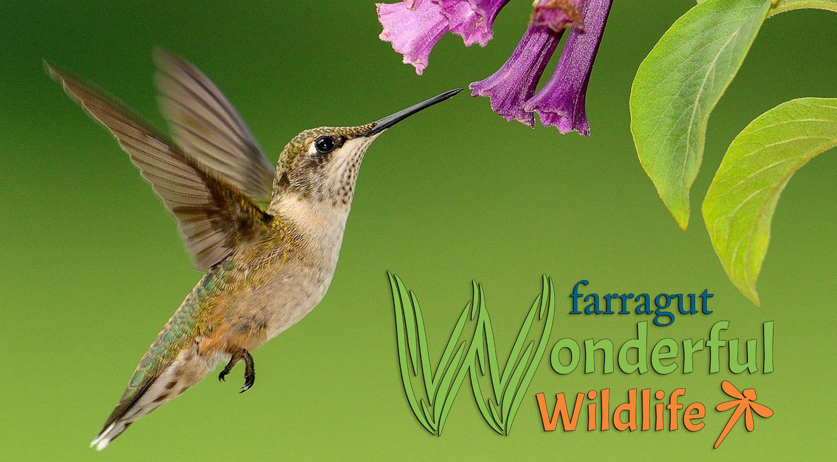 hummingbird at flower with wonderful wildlife logo